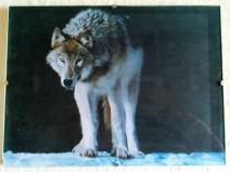 Ein Wolf im Schnee in tiefschwarzer Nacht