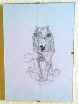 Bleistiftzeichnung eines rennenden Wolfes
