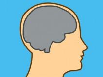Ein skizzierte Darstellung eines menschlichen Kopfes mit Gehirn (Querschnitt)