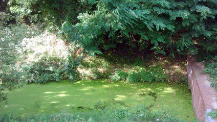 Foto von sehr grün verdrecktem Wasser