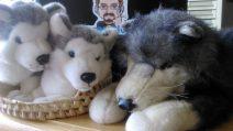 Foto: Zwei kleine Plüschwölfchen im Körbchen. Daneben ein Kuschel-Husky.
