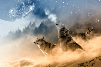 Grafik: Drei Wölfe auf einer Anhöhe. Im Hintergrund ist Wald zu sehen und oben der Mond. Ein Wolf heult.