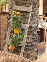Foto einer kleinen Leiter, an der Blumenkästen mit Sonnenblumen befestigt sind und zur Zierde an eine Palme gelehnt ist.