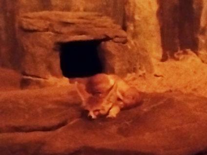 Ein Foto von einem Fennek im Nachttierhaus des Zoo Berlin
